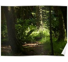 THE LIGHT IN THE WOODS  Poster