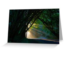 Redwood Forest Sunset Greeting Card