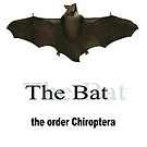 The Bat, of the Order Chiroptera by Charles Buchanan