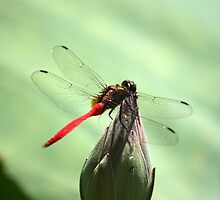 Dragonfly by Martyn Baker | Martyn Baker Photography