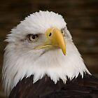 Eagle close up by ArtforARMS