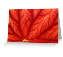 Under Shades of Red Greeting Card