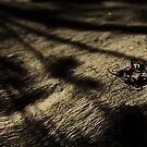 colour ant by Matthew  Smith