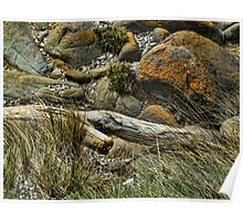 Rocks and Driftwood Tasmania Poster
