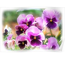 Pink'n'Purple Pansies Poster