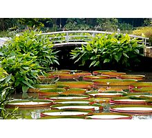 Giant Water Lilies Photographic Print