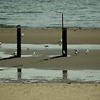 The Beach by Els Steutel