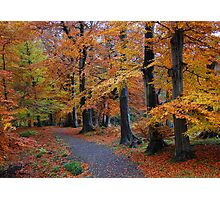 Autumn colours, Allen Banks, Northumberland Photographic Print