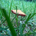 Mushroom by Cassie Jahn