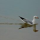 Seagull Swiming by MaeBelle