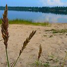 Shore Grasses by MaeBelle