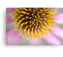 Take Echinacea To Prevent Colds Canvas Print