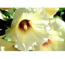 Yellow Bells Photographic Print