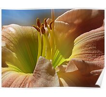 ~ Peachy Daylily ~ Poster
