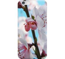 Peach Blossom Time iPhone Case/Skin