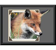 Framed Fox Photographic Print