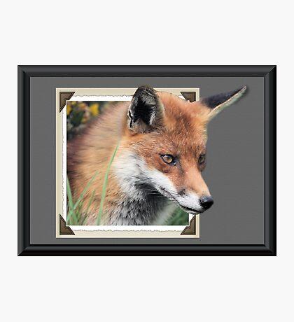 Framed Fox Photographic Print