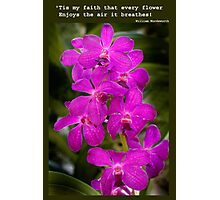 Orchid Beauty Photographic Print