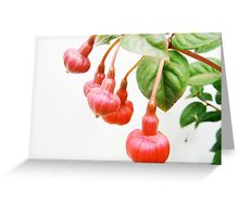 Hanging with Friends....Fuchsia triphylla Greeting Card