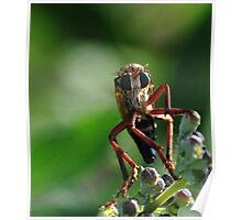 Robber Fly 2 Poster
