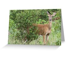 doe in her habitat Greeting Card