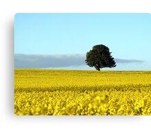 Fife's Golden Fields Of Rapeseed. Canvas Print