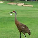 Sandhill Crane on a Golf Course in Florida by Missy Yoder