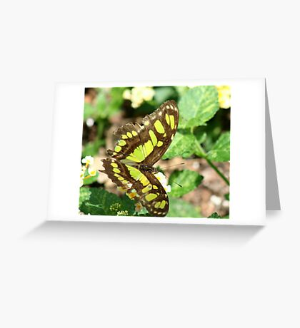 Beautiful Butterfly in a Garden  Greeting Card