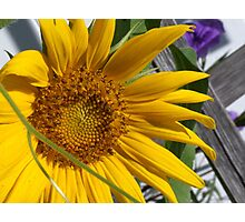 Sunny Days in the Garden Photographic Print