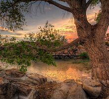Through the Trees by Bob Larson