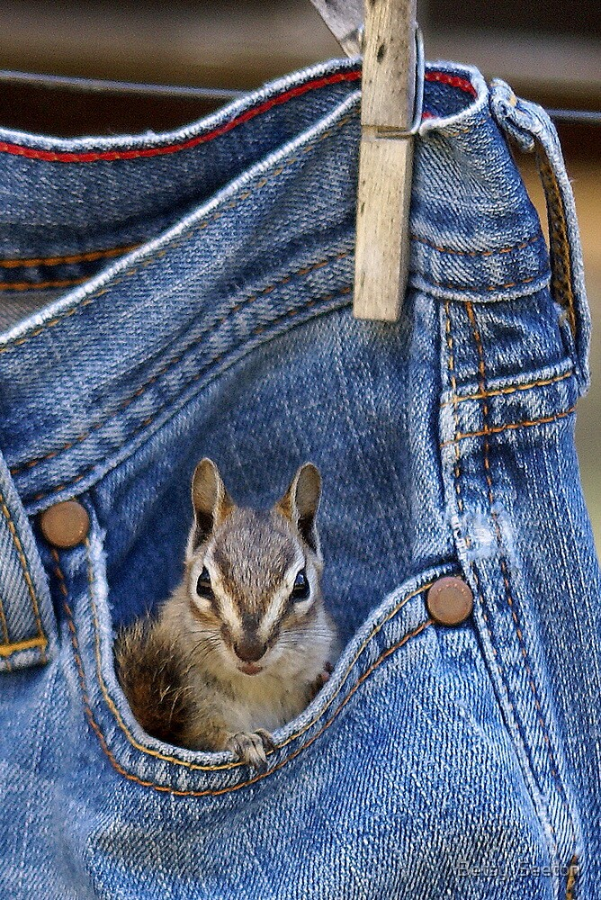 Pocket Full of Delight by Betsy  Seeton