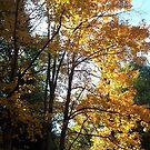 Autumn Yellow by teresa731