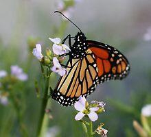 Resting Monarch by Ravyk
