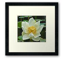 Spiritual Kloth White Lotus by Kordial Orange Framed Print