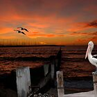 Pelican Sunset by Maree Toogood