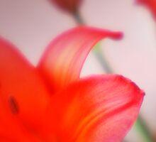 Red Lilies by Terri-Anne Kingsley