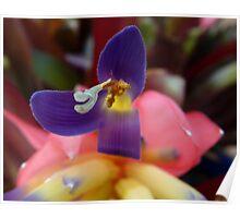 Bromeliad Flower  - Up Close Poster