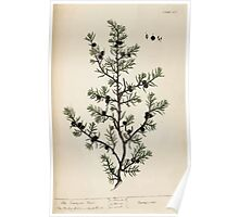 A curious herbal Elisabeth Blackwell John Norse Samuel Harding 1737 0478 The Juniper Tree Poster