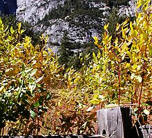Autum In Yosemite Valley by Cupertino
