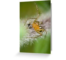 Oxyopes quadrifasciatus Greeting Card