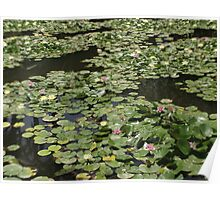 Glistening Waterlillies Poster