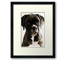 Luthien's Portrait In Sepia -Boxer Dogs Series- Framed Print