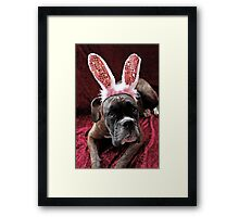 Boxer With *Wabbit* Ears Framed Print