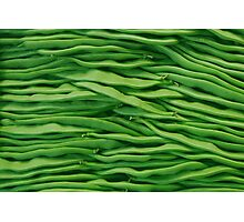Beans in line Photographic Print
