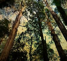 Ancient Timber by Cathy  Walker