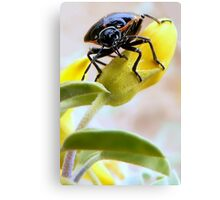 A Very Handsome Beetle Am I Canvas Print