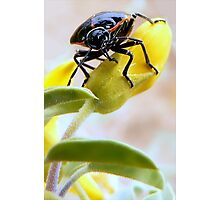 A Very Handsome Beetle Am I Photographic Print