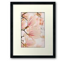 Magnolias Framed Print