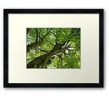 The Mother Tree Framed Print