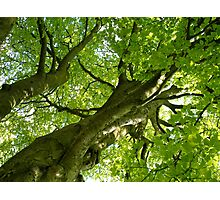 The Mother Tree Photographic Print